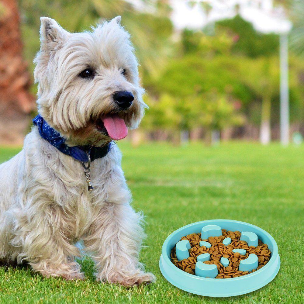 Supwall Pet Fun Feeder Dog Bowl Slow Feeder Super Design