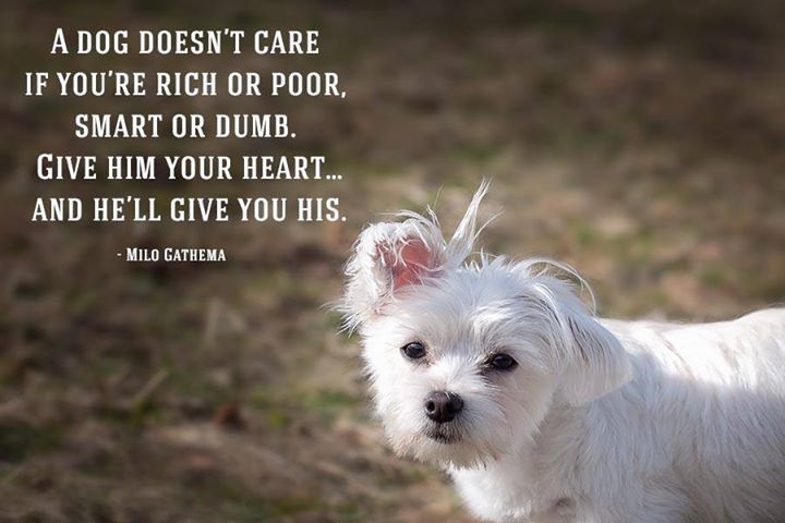 A dog doesnt care if youre rich or poor smart or dumb Give him your heartand hell give you his -Milo Gathema #dogs #cats
