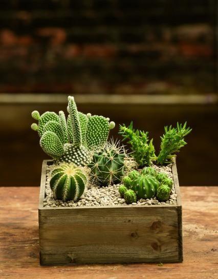 Photo of Cactus Box