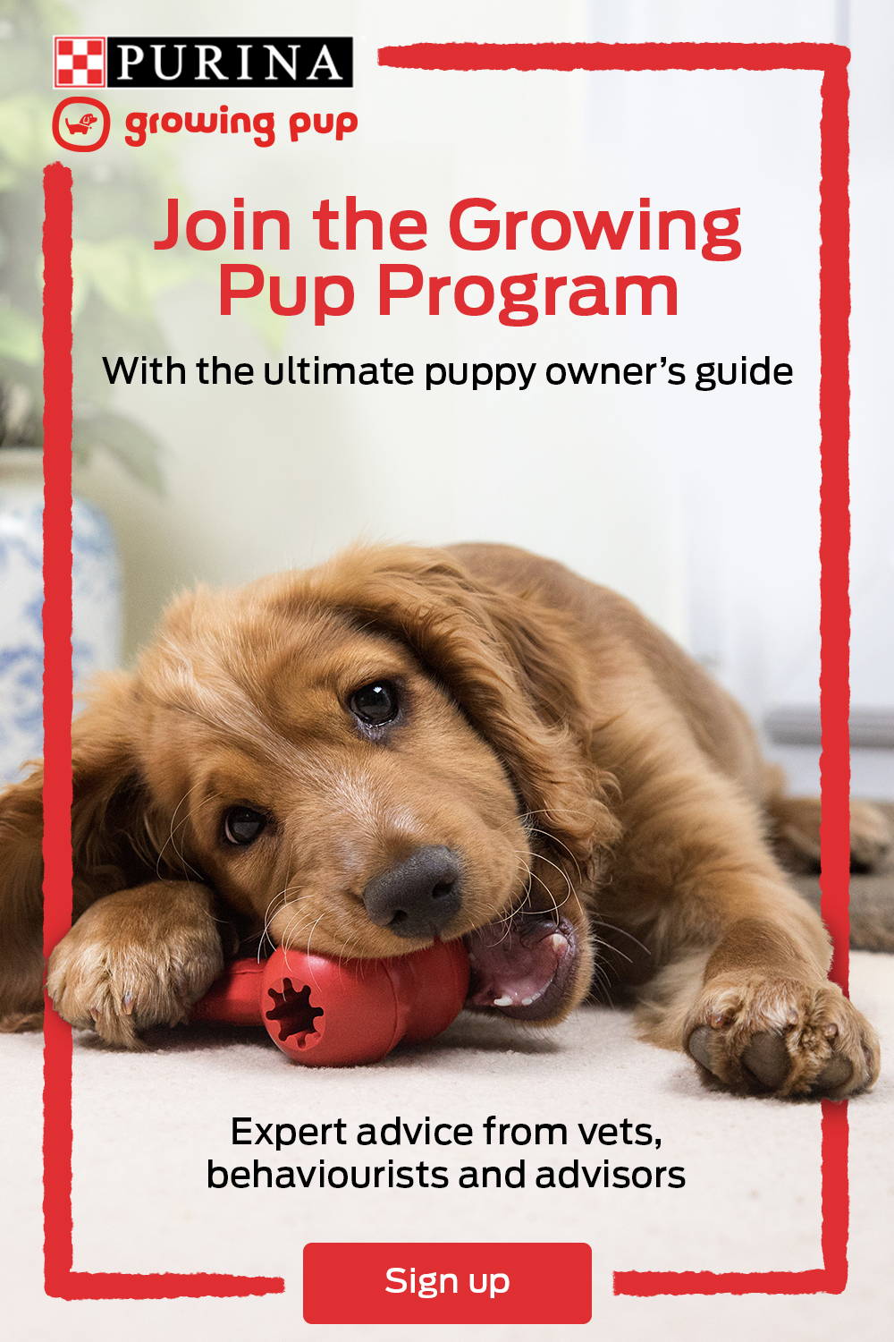 Nestle Purina P1 V1 In 2020 Pup Puppies Puppy Owner