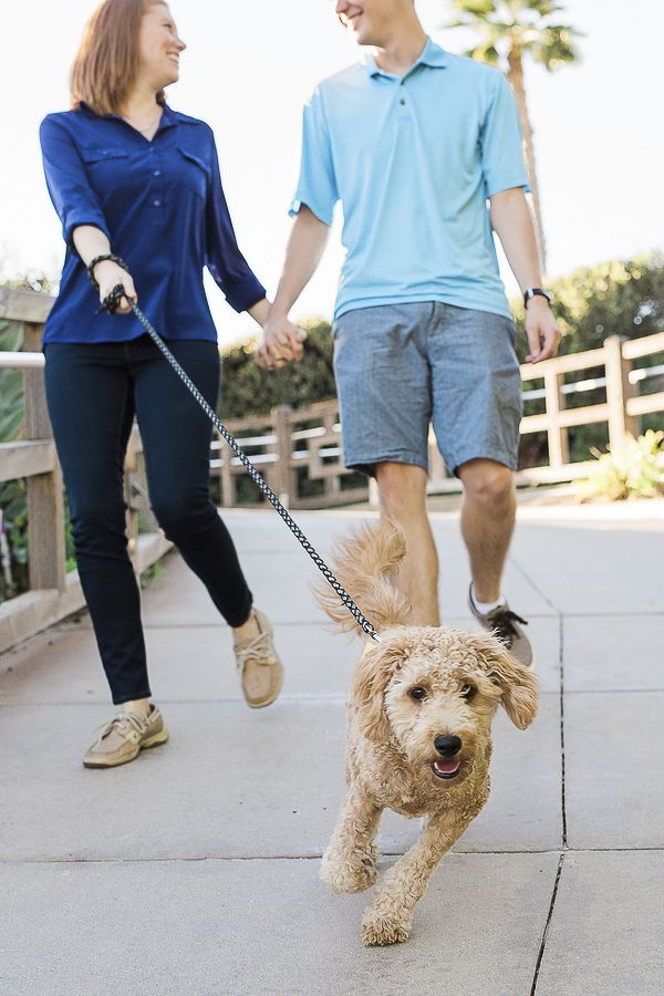 Puppy Love Waffles The Golden Doodle Goldendoodle Puppy Love