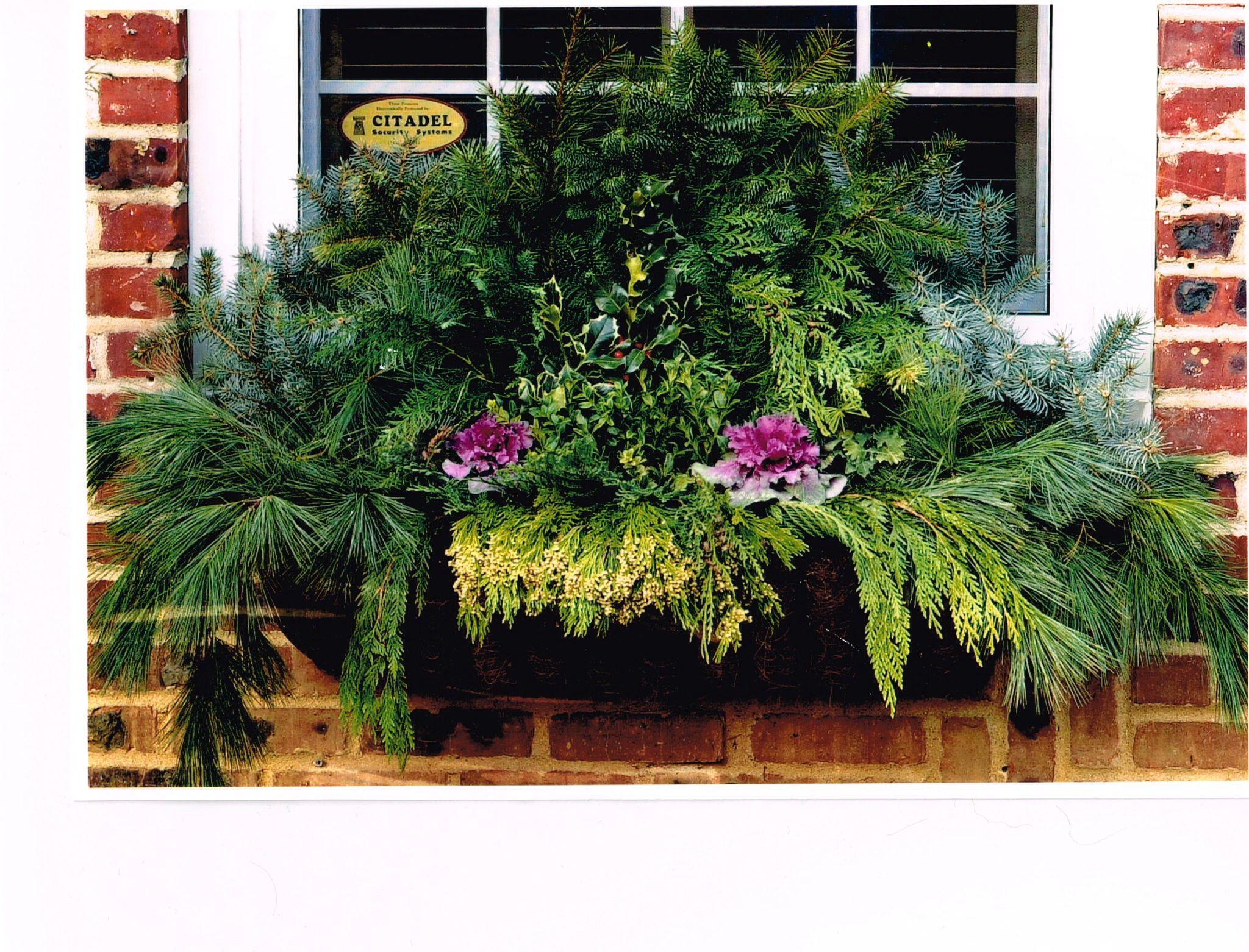 Holiday Window Box, Gardensonthegocom
