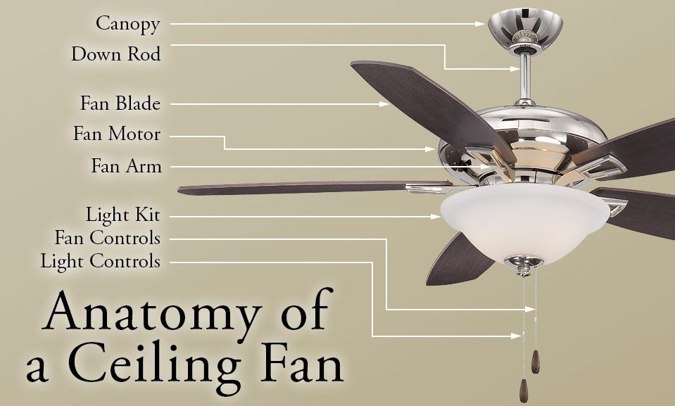 The Anatomy Of A Ceiling Fan Impress Your Friends With Your In Depth Ceiling Fan Knowledge Thanks To This Helpful Diagram Ceiling Fan Ceiling Fan