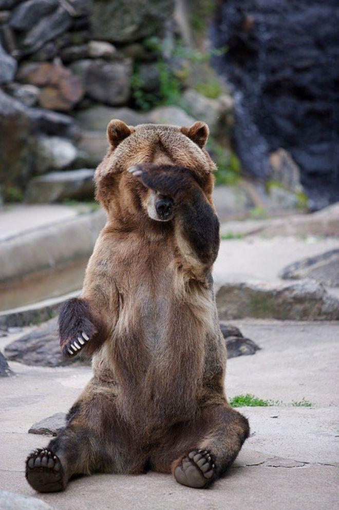 фото приколы с медведями выпечке яблоки
