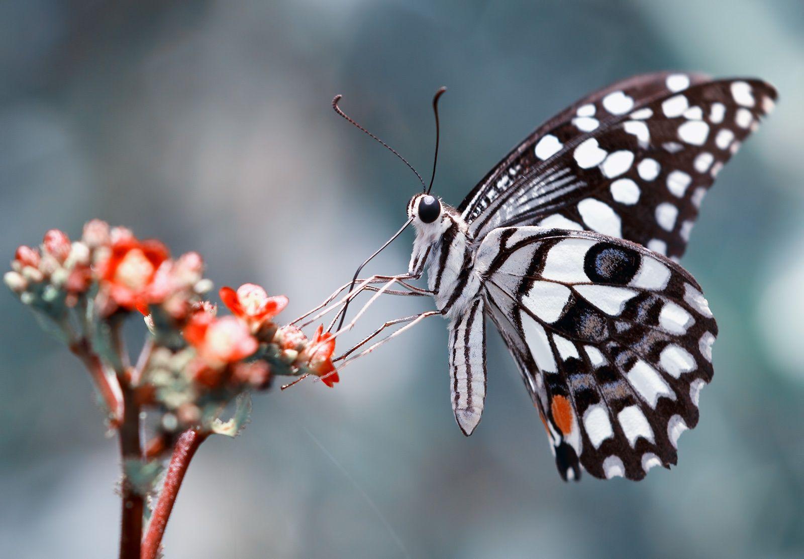 Fotografia Pollinator de karthi keyan na 500px