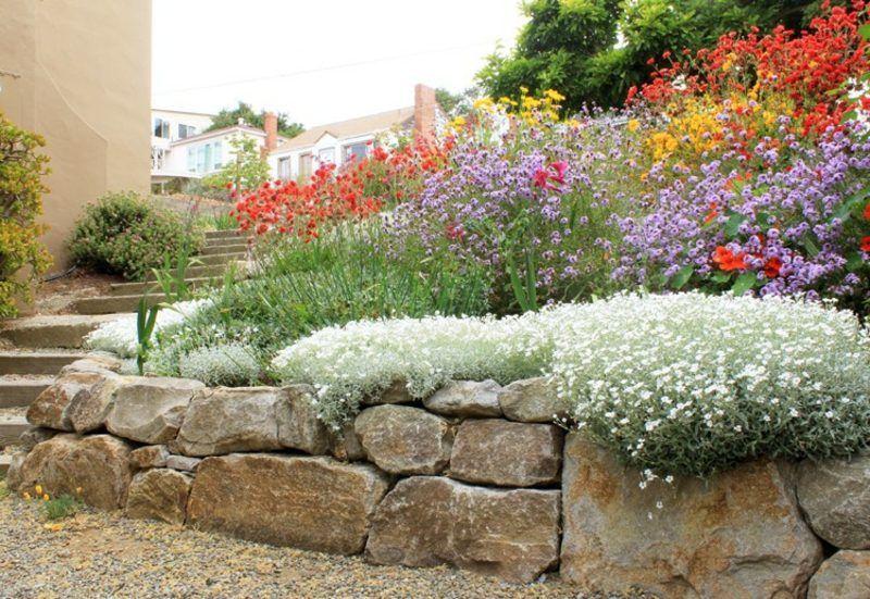 Trockenmauer Im Garten Bepflanzen Welche Arten Sind Dafur Geeignet Steinhaufen Krauterspirale Natursteinmauer Naturstein Plants Stone Plant Garden Wall