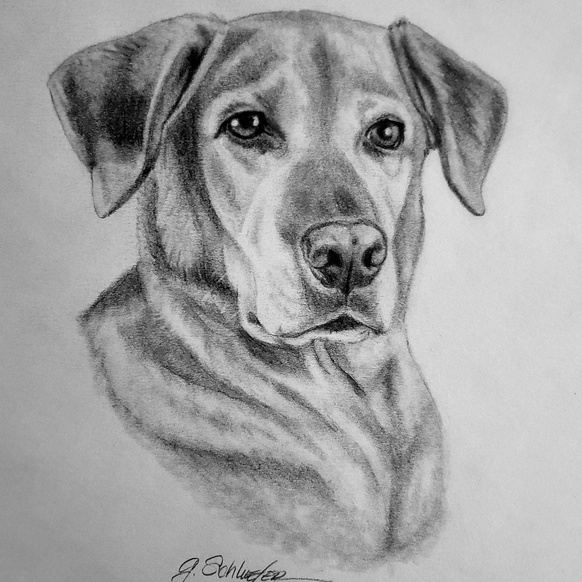 Custom Pencil Dog Portrait Baby Bodysuit,Dog Photo to Sketch ...