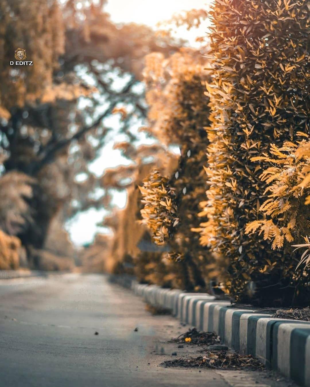 Nice Background Dslr Background Images Blur Photo Background Blurred Background Photography