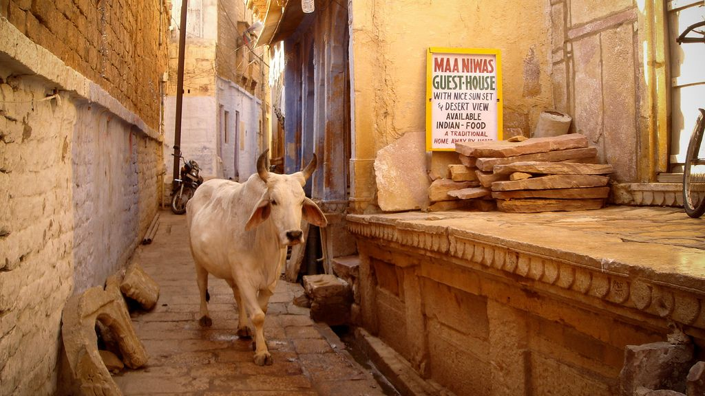 https://flic.kr/p/4gJaUq | Cow | A holy cow in a street of Jaisailmer (Rahjastan, India)