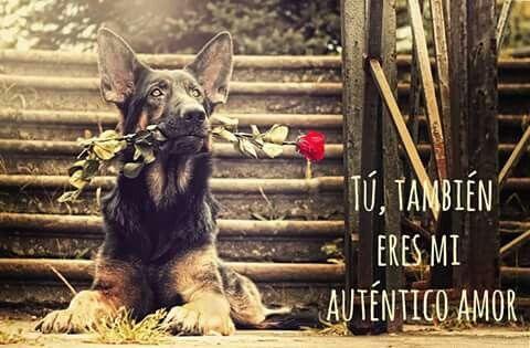 Perros el dia de los enamorados