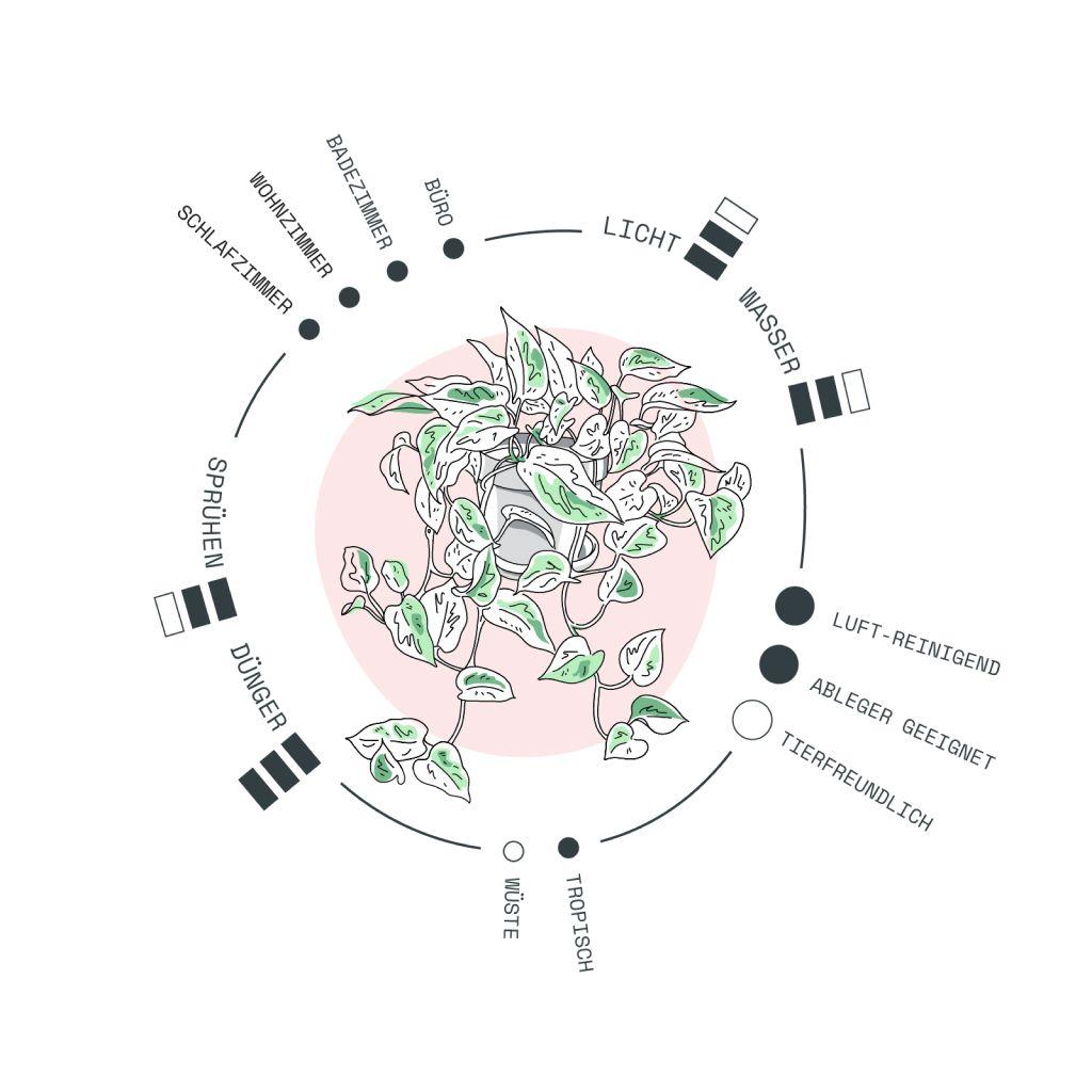 Epipremnum Marble Queen Pflege In 2020 Pflanzen Efeutute Zimmerpflanzen