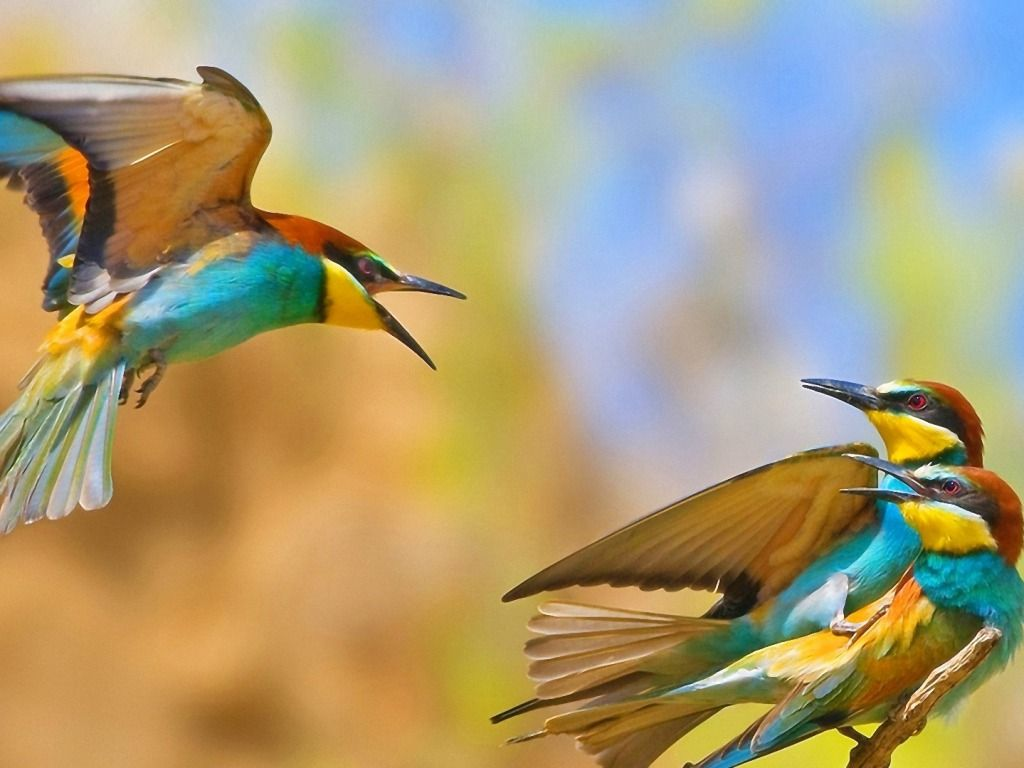 Love Birds Wallpapers HD Free Download for Desktop Magazine Fuse