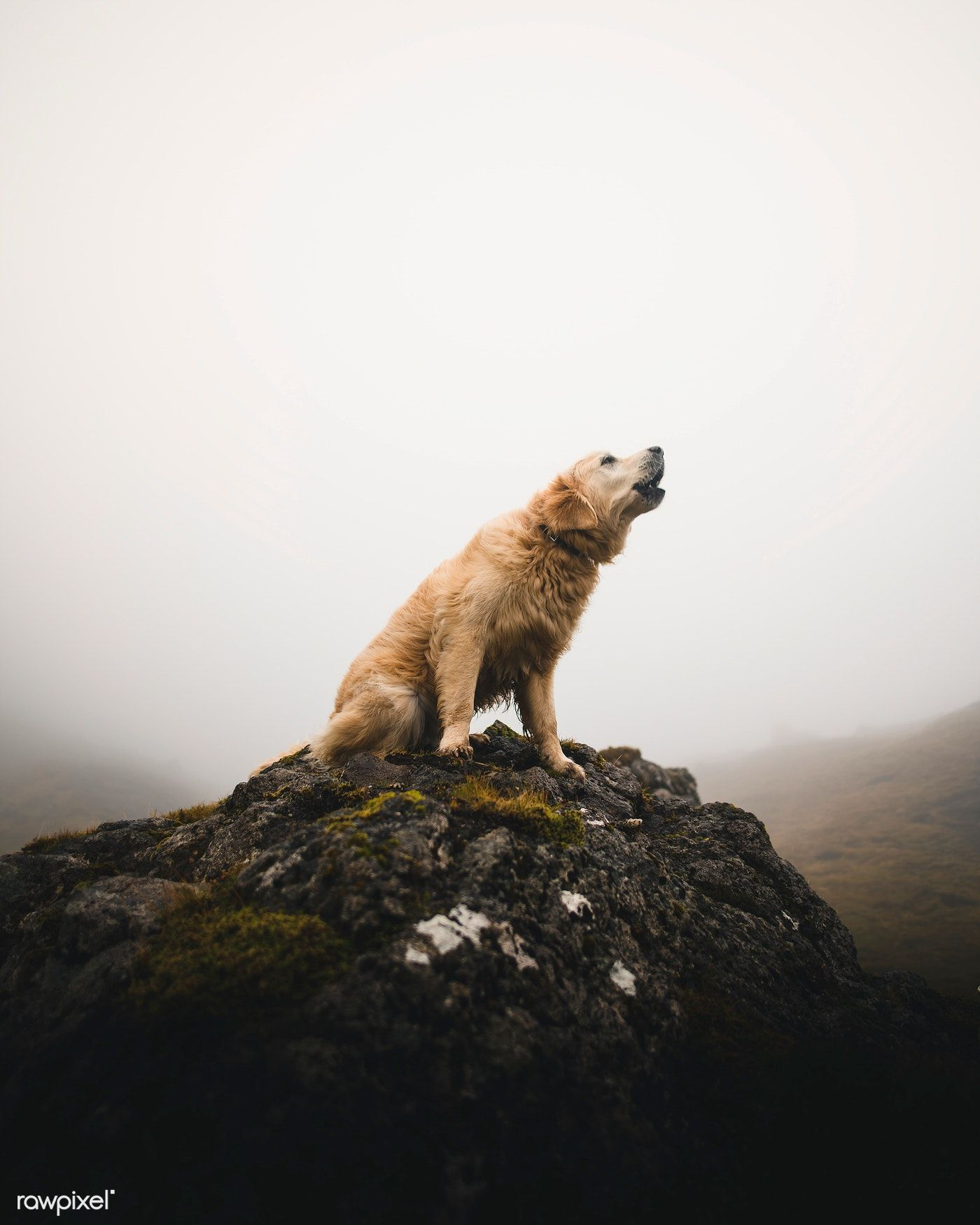 The dog barking on a rock among the misty Scottish