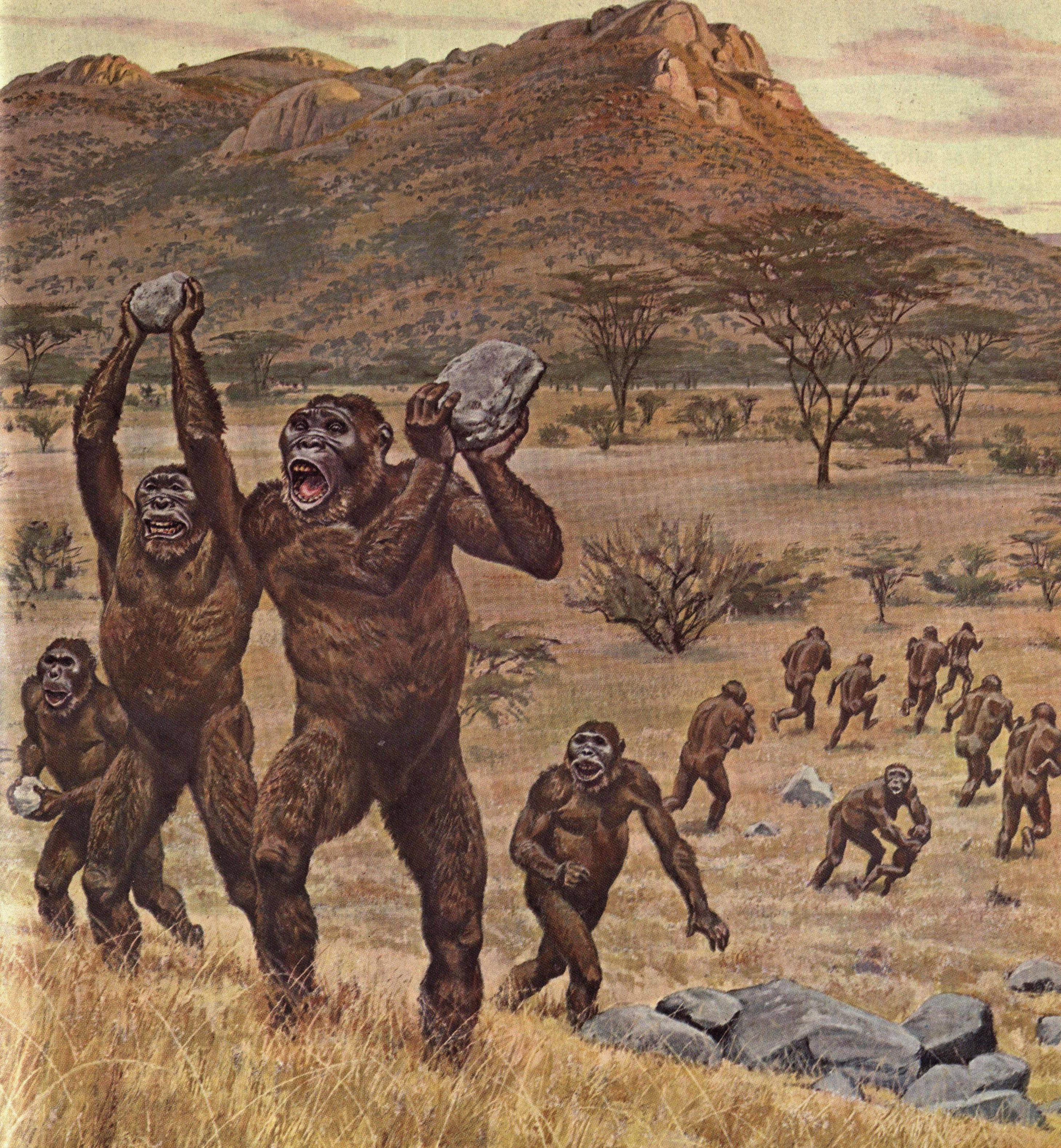 Early Humans Evolution Paranthropus robustus ...