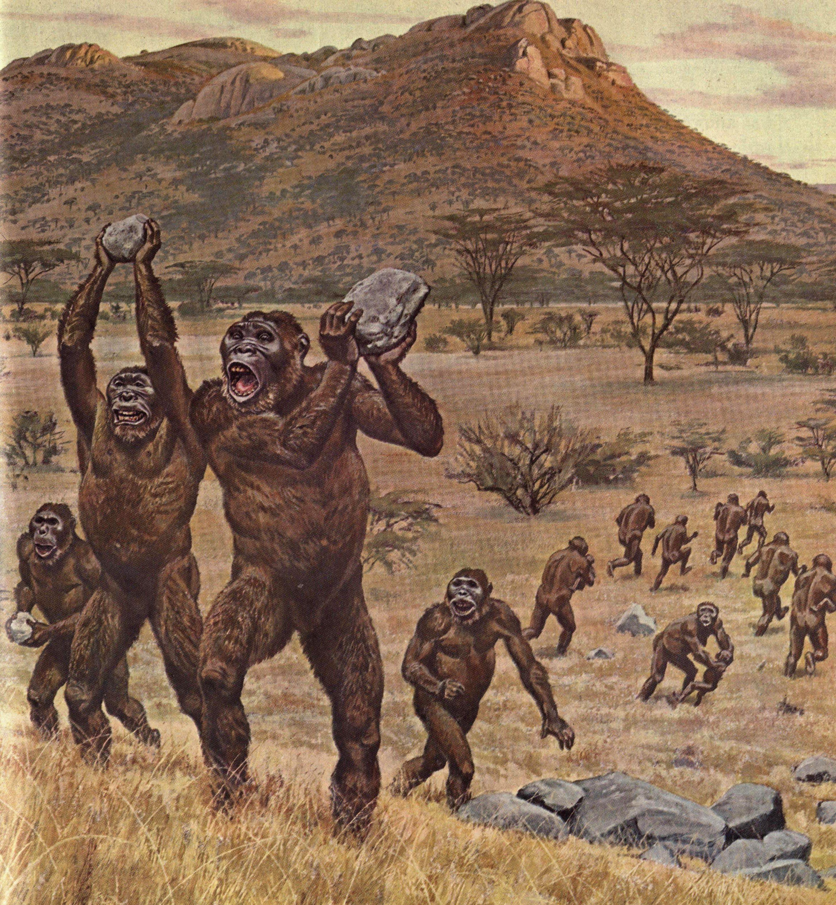 Paranthropus Robustus By Jay Matternes