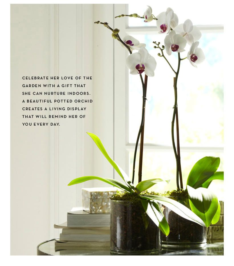 Potted orchid | Pottery Barn