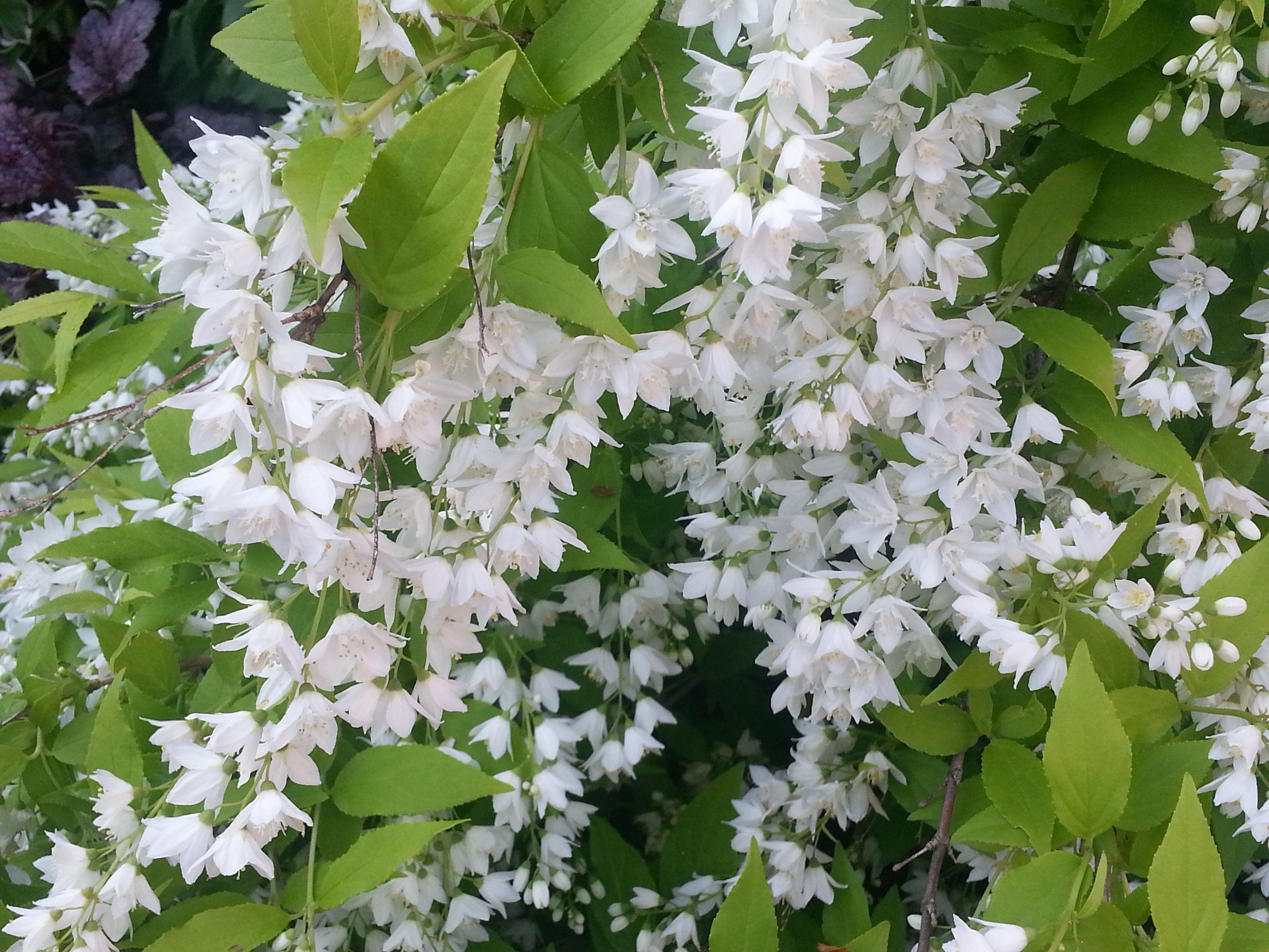 Spring Blooming Beauties!