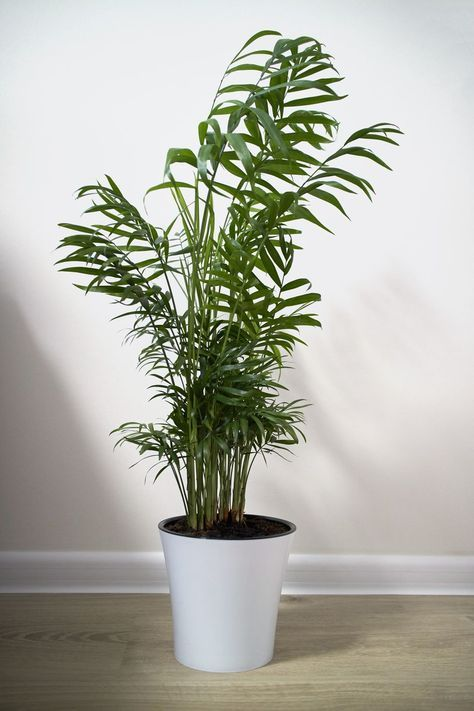 Low Light Houseplants You Don T Need A Green Thumb To Keep 400 x 300