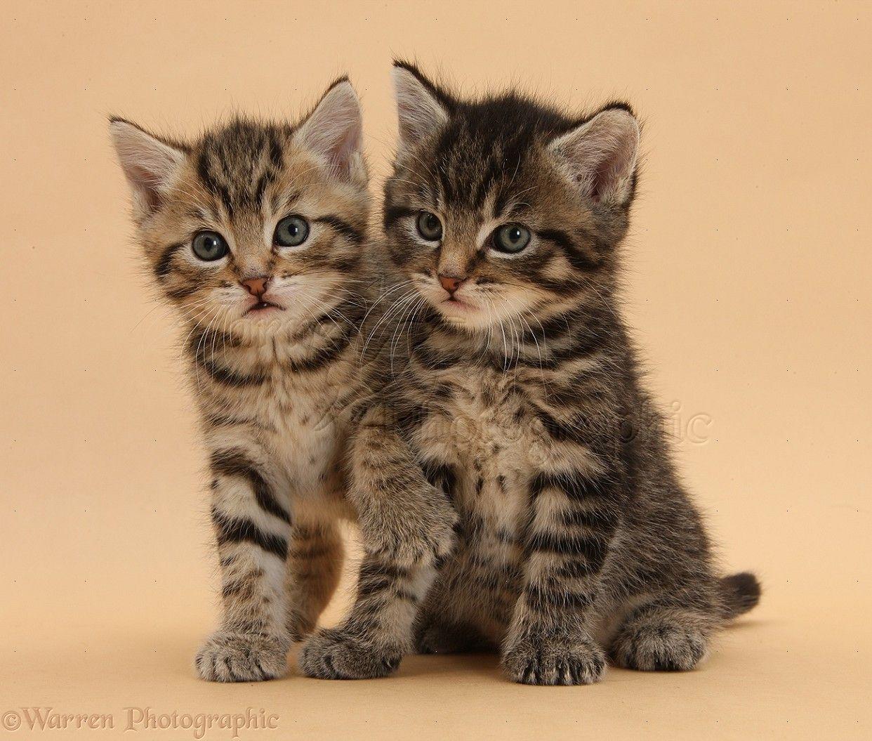 Cute Tabby Kitten below for more cute cats