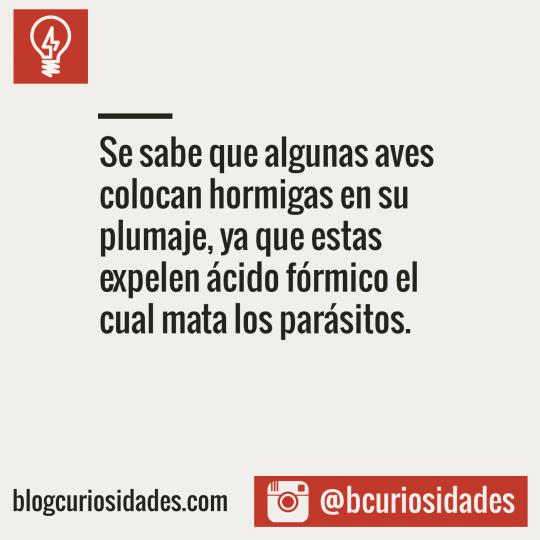 Blog Curiosidades