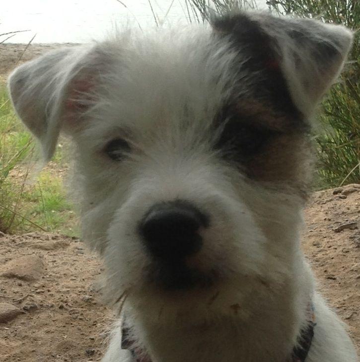 Scamp Near The Beach Brucerose2blog Wordpress Com I Love Dogs