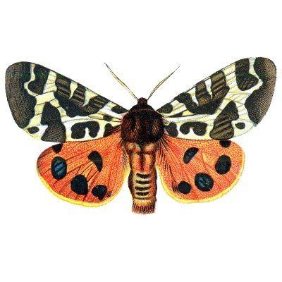 Free Vintage Printable Clip Art – Orange Butterflies for Halloween
