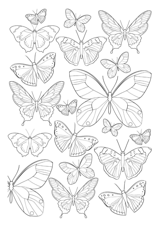 Pin Di Marilena Su Disegni Coperta Farfalle Disegni Da Colorare E