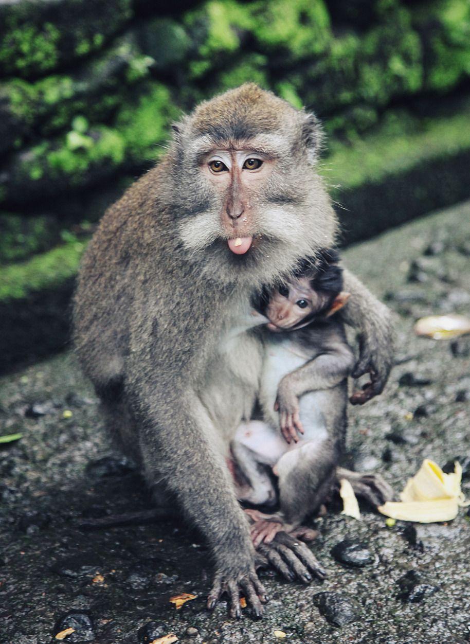 Sacred Monkey Forest. Ubud.