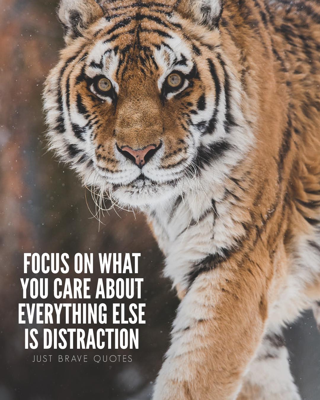 Quote Motivational Inspirational Success Inspiration