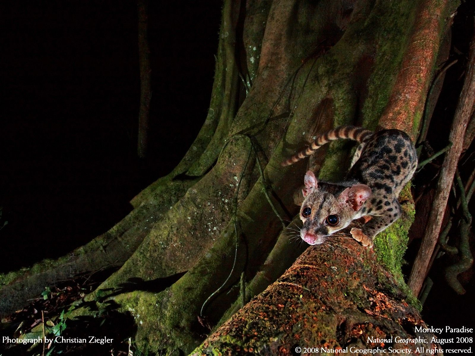 National Geographic Nocturnal Animal Nocturnal animals