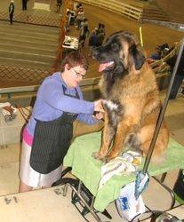 Alamance Kennel Club Photos - Alamance Kennel Club, Inc