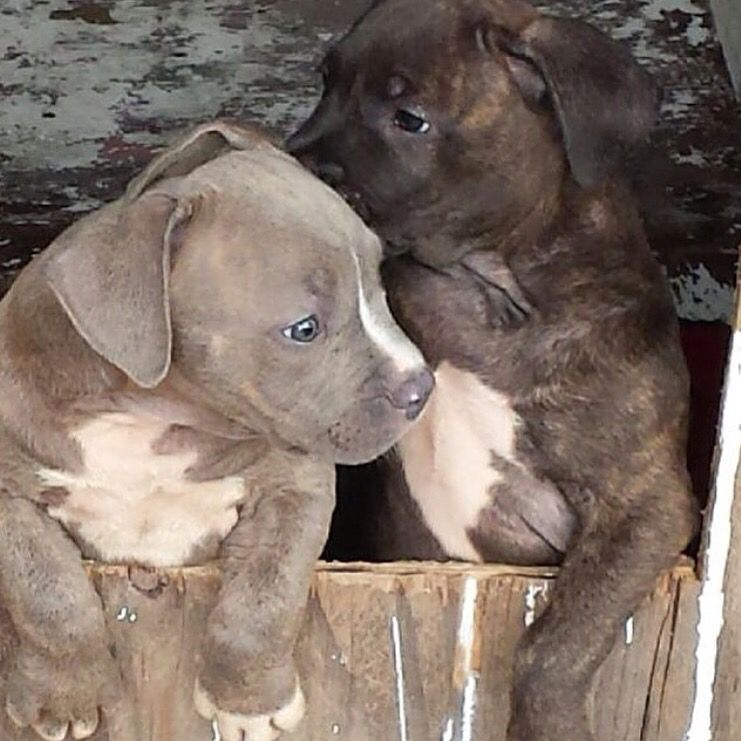 Steel MoneyMaker as a pup in the left.