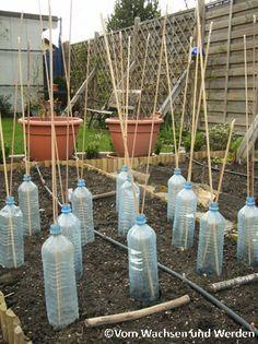 Photo of Som gartner kan du bruke nesten alt som andre kaster bort: …