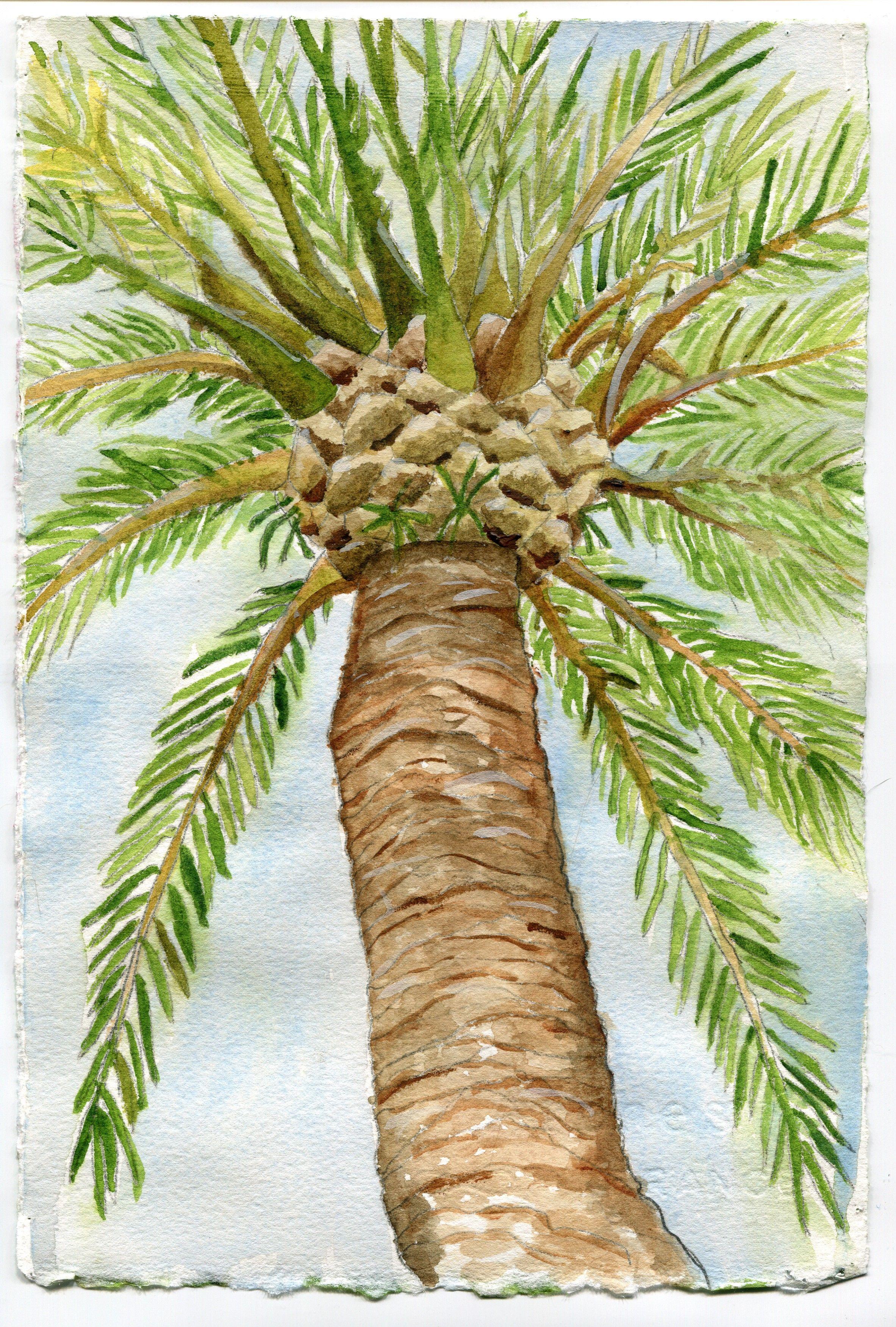Palm Tree | Watercolors | Pinterest | Watercolor