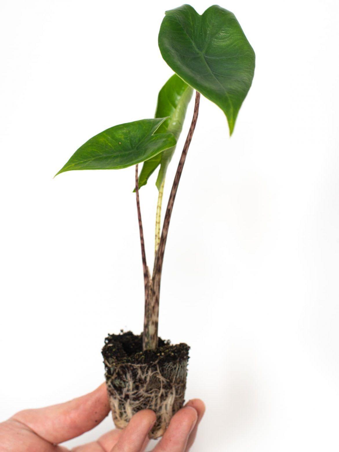 Online Babyplants Grow Your Own Jungle Mini Plants Easy Plants Plants