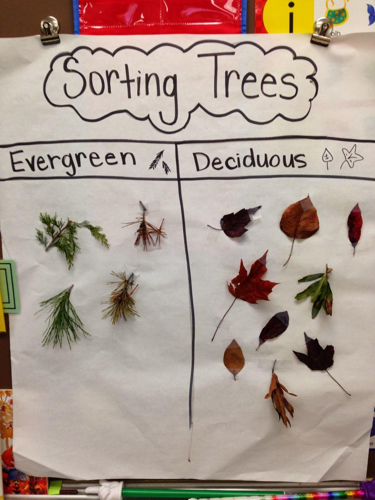 Sorting Trees Chart Mon. Nov. 10th Megan pls collect