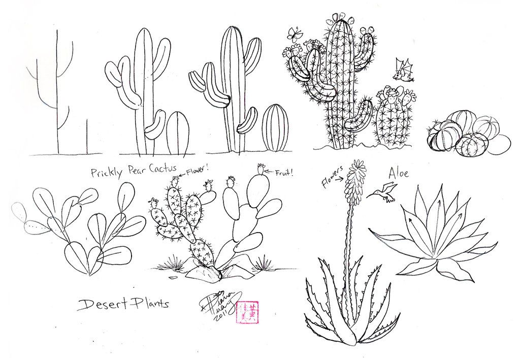 Line Drawing Cactus : Draw cactus by diana huang on deviantart zentangle and