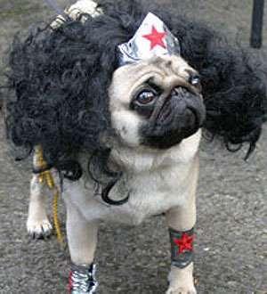 Humiliating Dog Umentaries Pugs In Costume Baby Pugs Cute Pugs