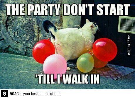 Party Cat Arrives Cat Memes Pinterest Funny Cats Funny