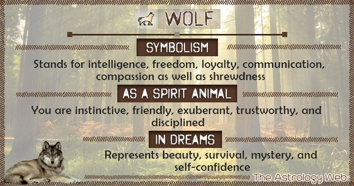 Wolf Spirit Animal Meaning White Black Lone Wolf What Does It