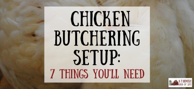 Chicken butchering set up 7 things you need a farmish