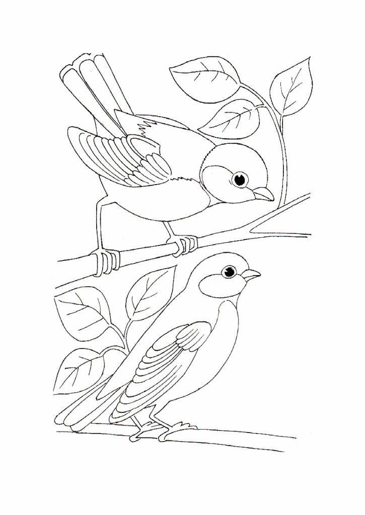 Wild Bird Coloring Pages Vogels Tekenen Kleurplaten Dieren Tekenen