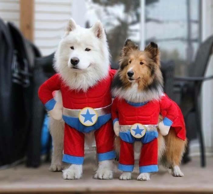 Just Adorable Funny Too Lustige Hundekostume Hund Halloween Niedliche Hunde