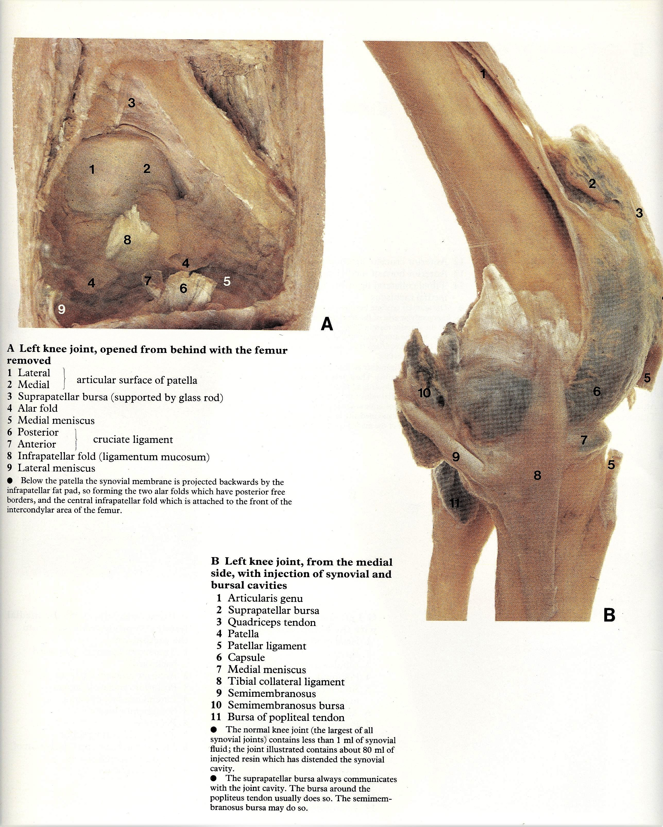 Pin By Bengt Sandberg On Part 6 Of 6 Lower Limb Atlas Of Human
