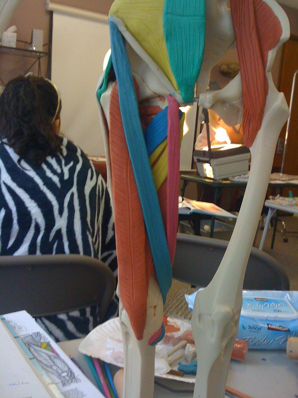 Anterior thigh. Maniken Anatomy class. Best way ever to learn ...