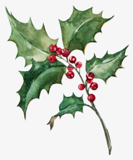 Transparent Holly Leaf Clipart Holly Painting Png Transparent Clipart Christmas Leaves Holly Leaf Leaf Clipart