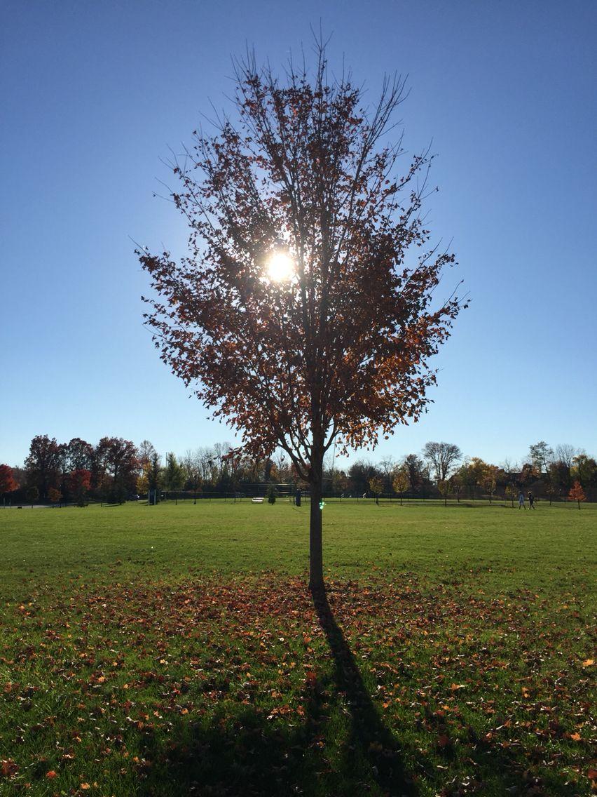 I think it's nice shot ;) USA autumn
