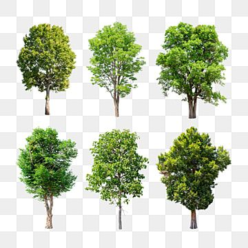 Isolated Trees Set On Transparent Background Nature Tree Garden Png Transparent Clipart Image And Psd File For Free Download Tropical Tree Tree Psd Watercolor Tree