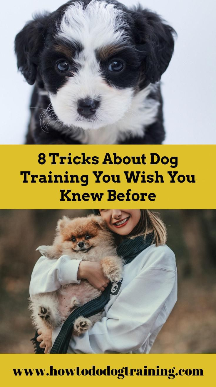 Need Support With Dog Training Consider These Pointers When