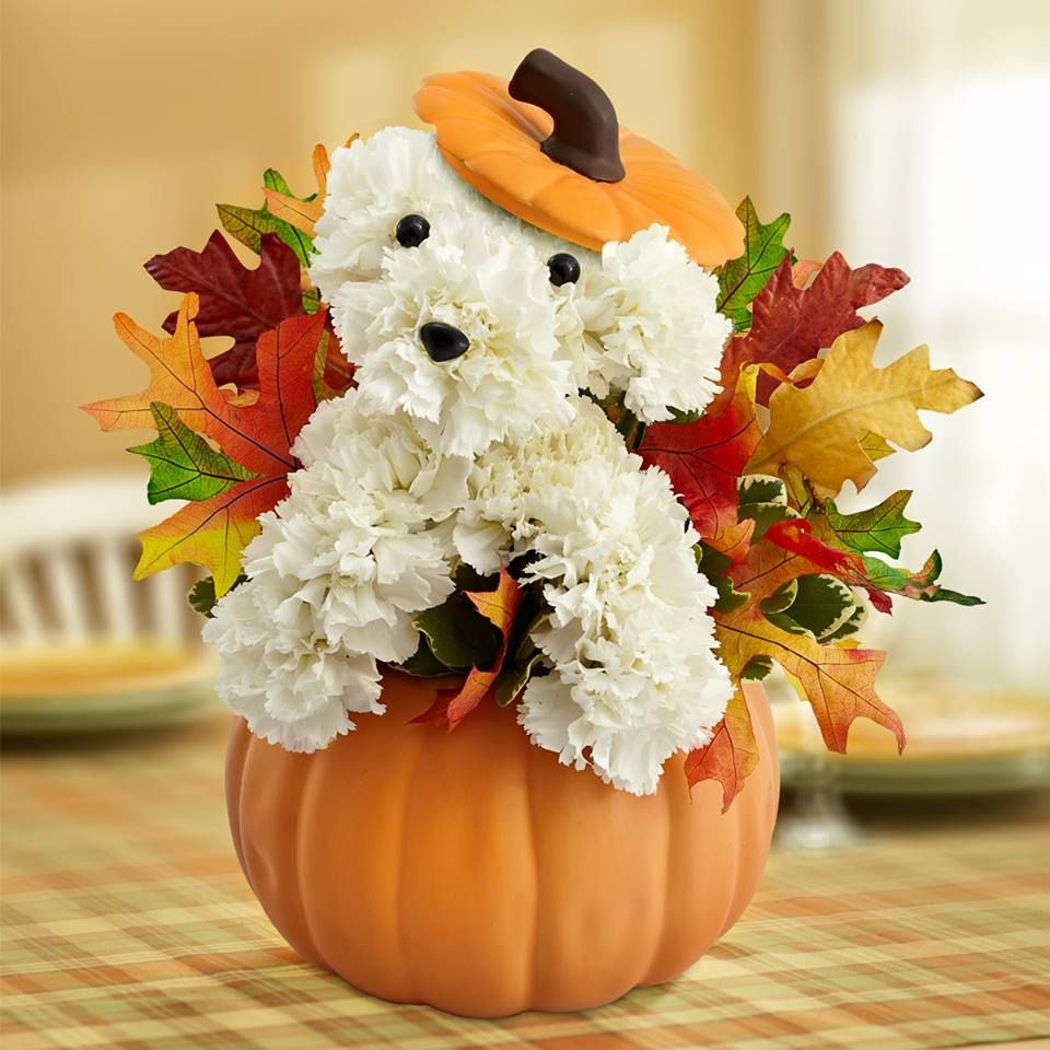 Fall puppy floral arrangement autumnfallthanksgiving pinterest fall puppy floral arrangement izmirmasajfo Gallery